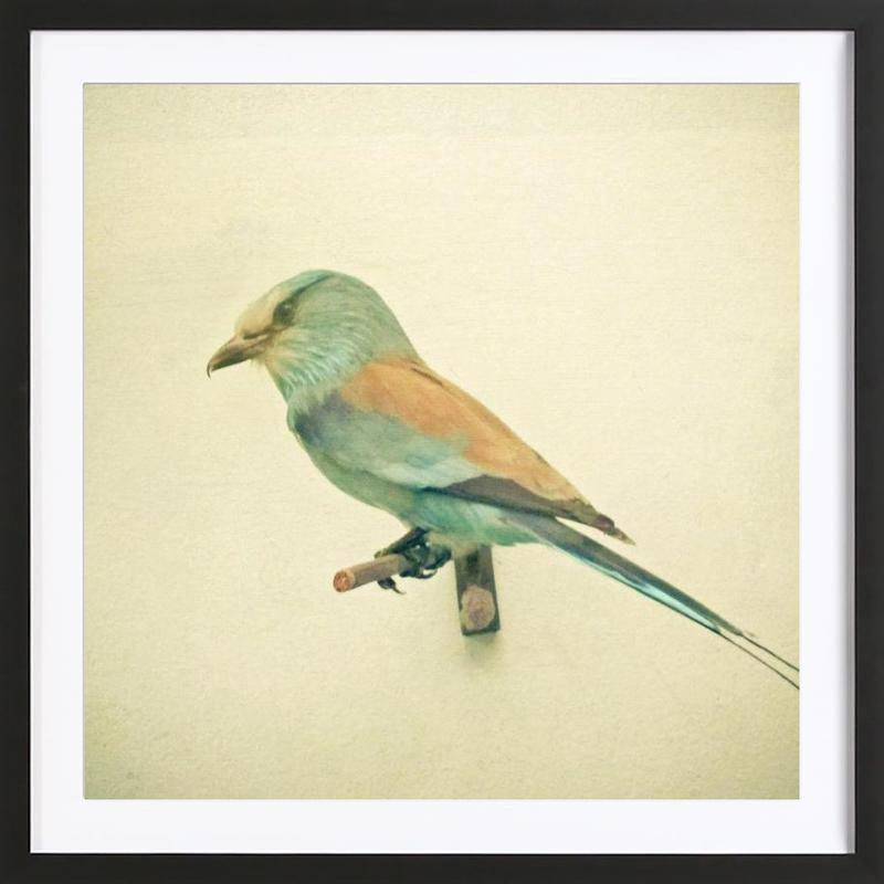 Bird study #2 Framed Print