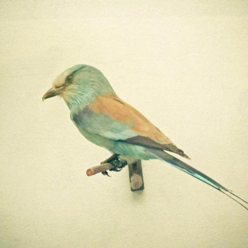 Bird study #2 Canvas Print