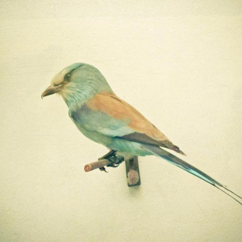 Bird study #2 Acrylic Print