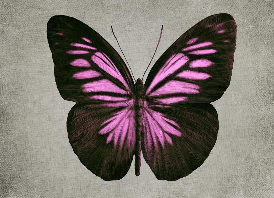 Papillon (pink) Canvas Print