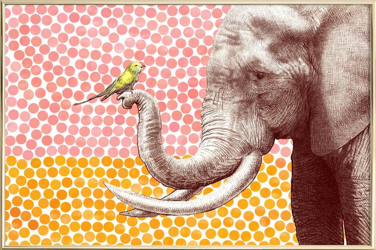 Elephant and Bird Poster in Aluminium Frame