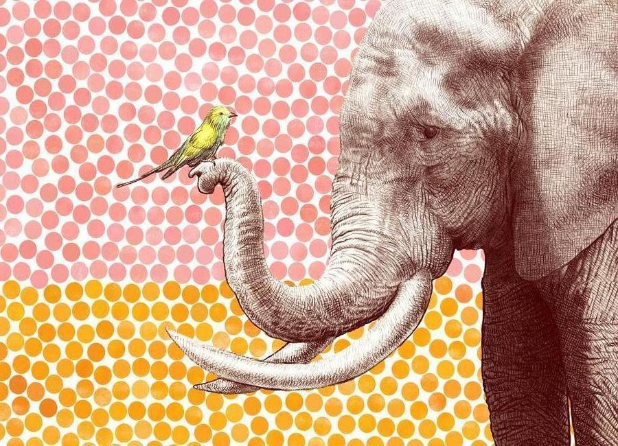 Elephant and Bird Canvas Print