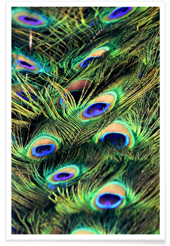 Peacock Plumes Poster